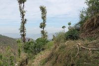 Himalayan view residential plots for sale near Nainital